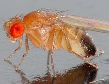 Hebben ongewervelde dieren zoals insecten en weekdieren ook hersenen en kunnen zij daarmee nadenken?