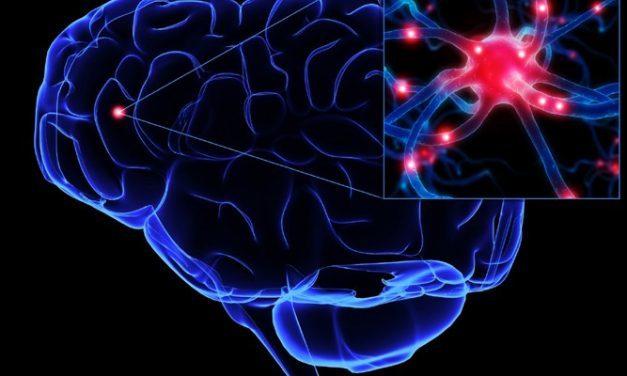 Wat als je maar één hersenhelft hebt?