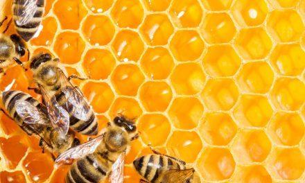 #FFF Insecten: efficiëntie in de microkosmos