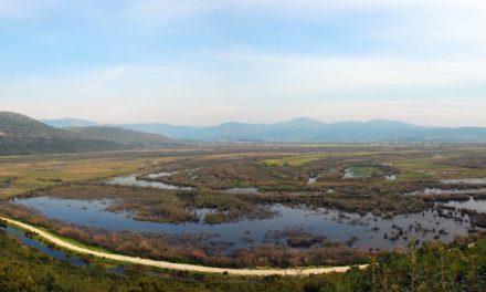 Trekvogels en tankstations: wetlands in Griekenland als belangrijke tussenstops