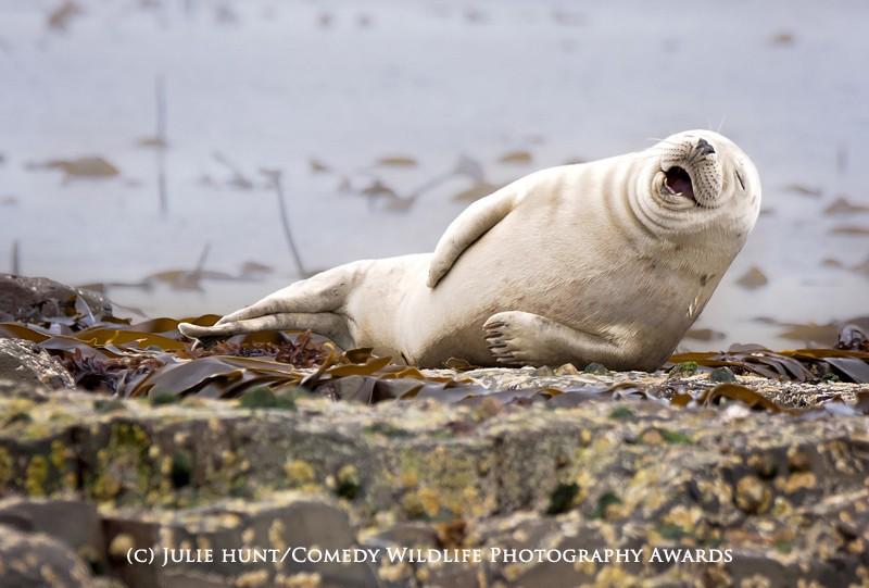 Comedy Wildlife Photography Awards: peuterende gorilla's en eekhoorns met een kater