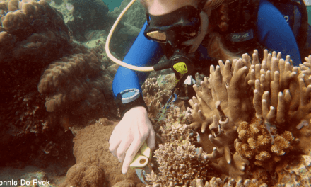 Protecting Nemo: genetisch onderzoek helpt bij bescherming van koraalriffen