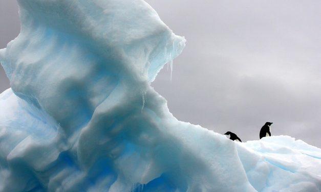 Op zoek naar algen in het zee-ijs van Antarctica
