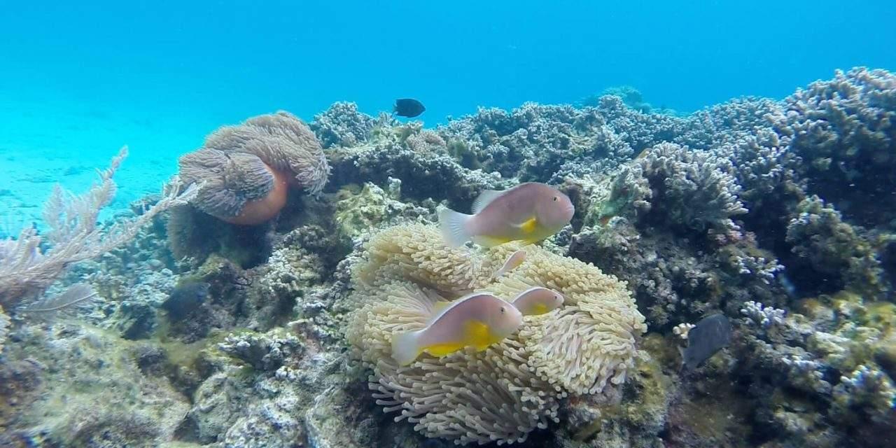 Hebben koraallarven een kompas? Op zoek naar de connectie tussen koraalriffen