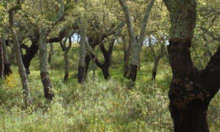 Hoe reageren bomen op klimaatverandering?
