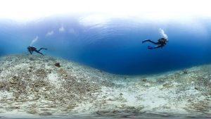 gebleekt koraal