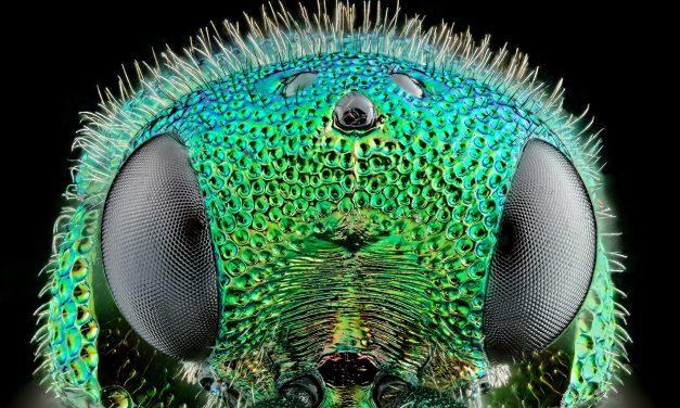 Amazing parasites part one: The Jewel wasp