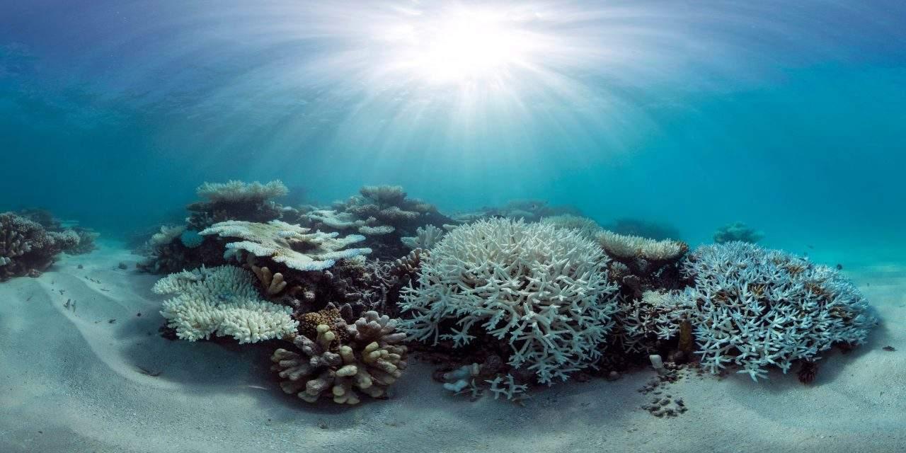 Koralen: topsporters aan hun taks