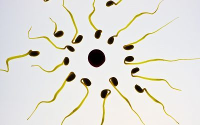 Nieuwe perspectieven voor onvruchtbaarheidspreventie bij jongens tijdens kankertherapie