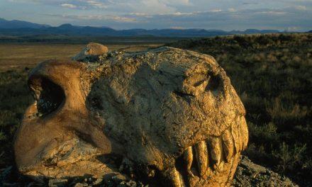 8 Ways the universe might kill us – Part 1: Mass Extinctions