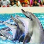 De wetenschap van dolfijnengeluk