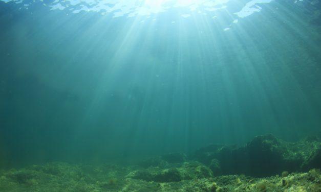 Zeebodemdieren zorgden 500 miljoen jaar geleden voor klimaatsverandering