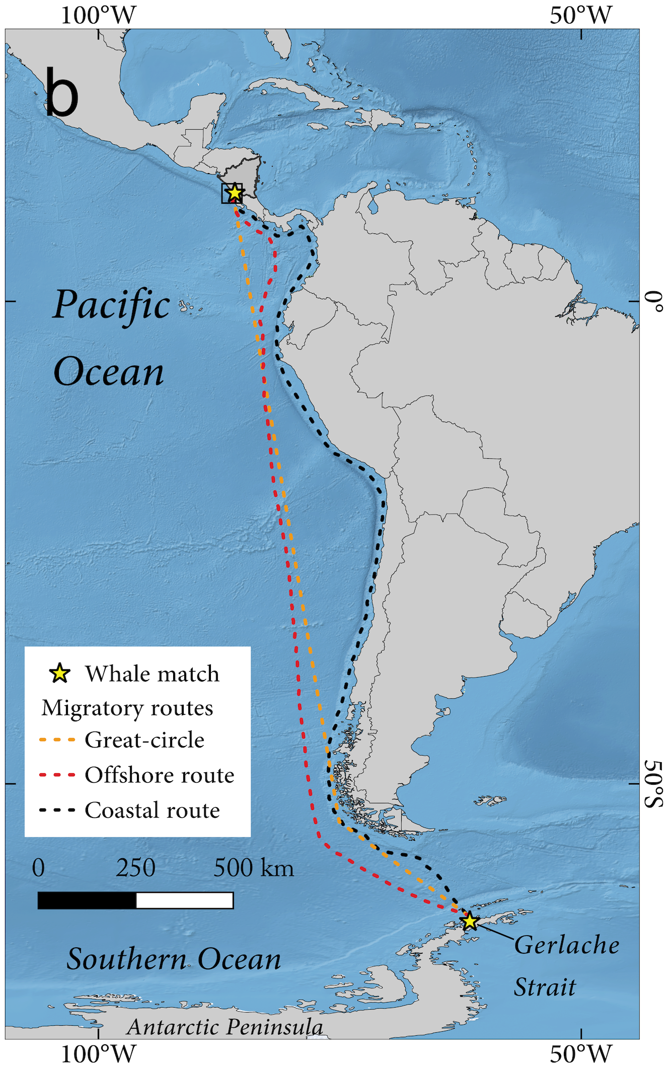 Possible migration routes of the humpback match between Nicaragua and Antarctica